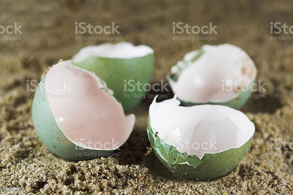 Empty Birds or Reptile Eggs on Sand royalty-free stock photo
