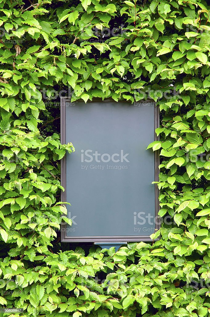 Empty board surrounded by leaves of ivy, closeup royalty-free stock photo