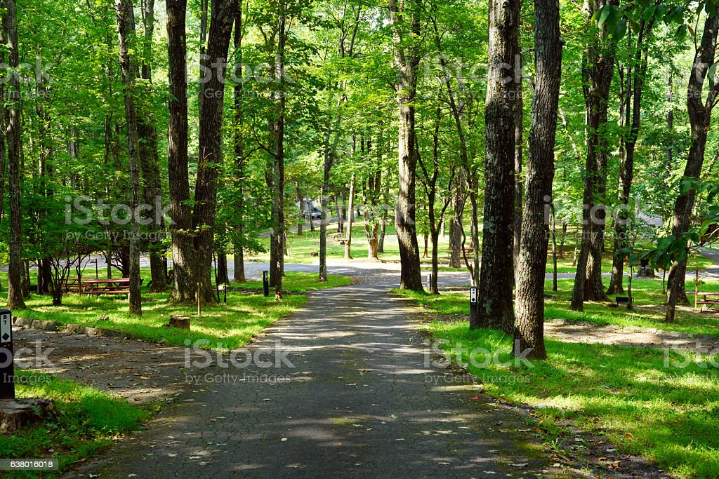 Empty campground with large trees stock photo