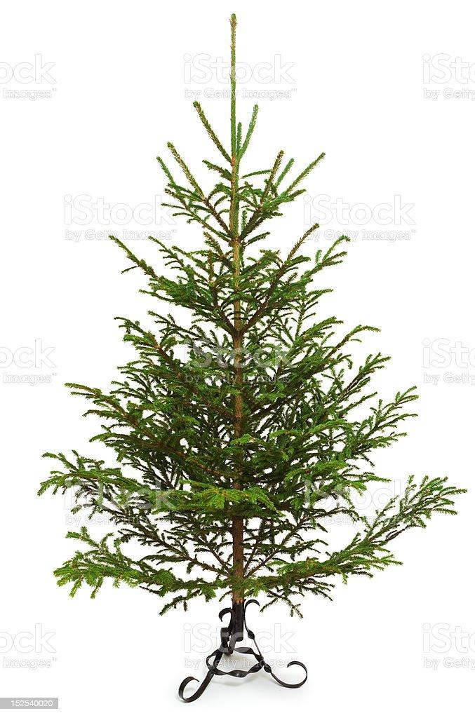 Empty Christmas tree royalty-free stock photo