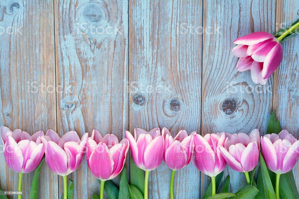 empty  copy space wooden background with pink white tulips border stock photo