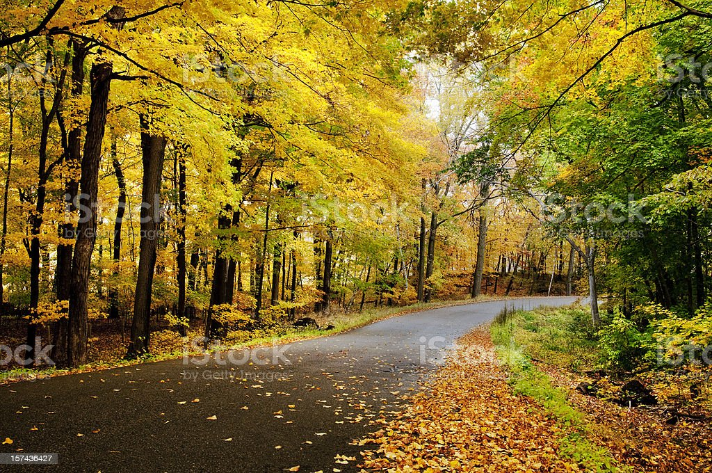 Empty country road with fallen autumn leaves stock photo