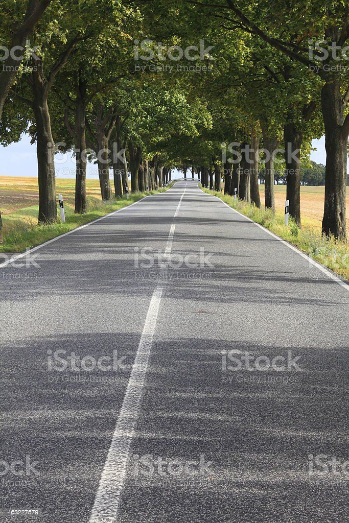 empty country road with tree avenue royalty-free stock photo