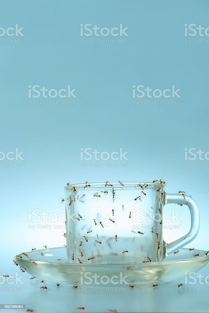 Empty cup and saucer covered by ants stock photo