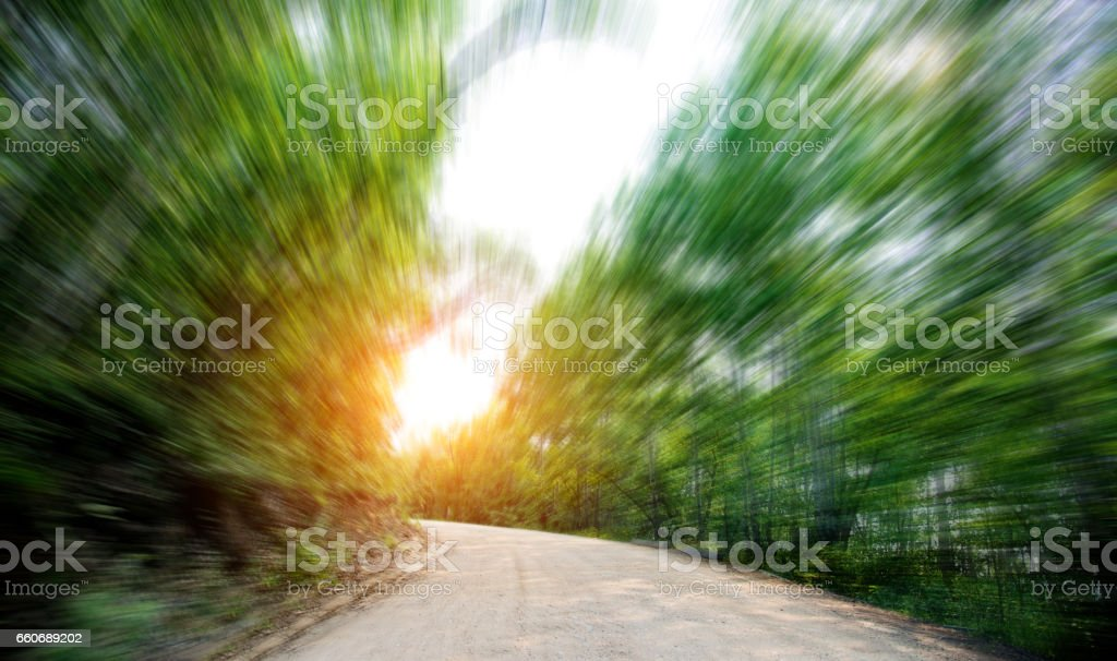 Empty dirt road in a forest stock photo