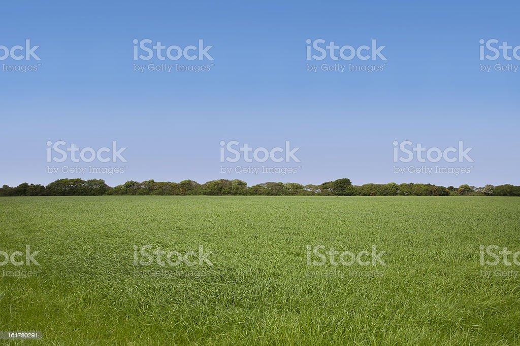 Empty Field royalty-free stock photo
