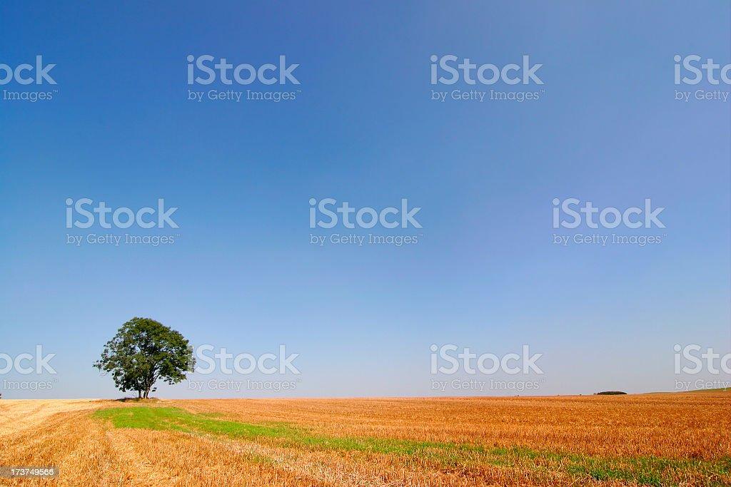 Empty Fields royalty-free stock photo