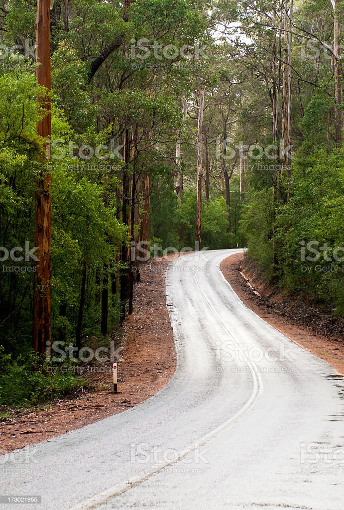 Empty Forest Road stock photo