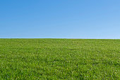 empty grassland and blue sky - background for composition