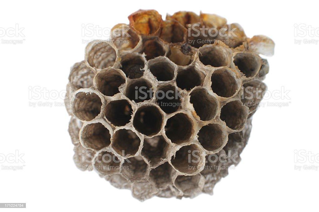 Empty Hive royalty-free stock photo
