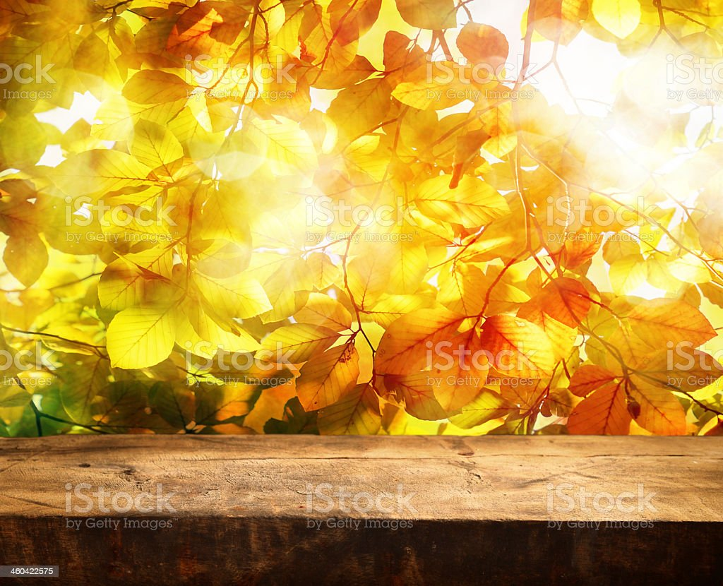 Empty log table in front of the yellow leaves of a tree stock photo