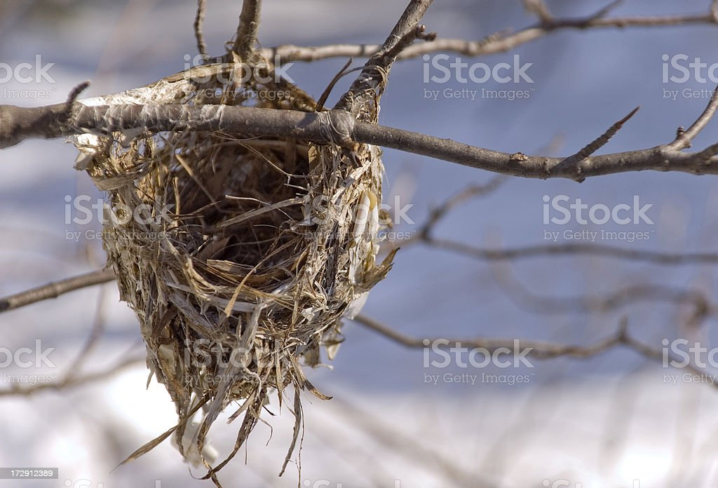 Empty Nest in Winter royalty-free stock photo