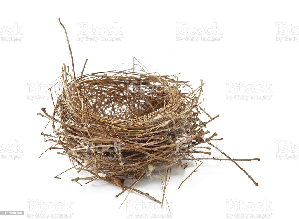 Empty Nest stock photo