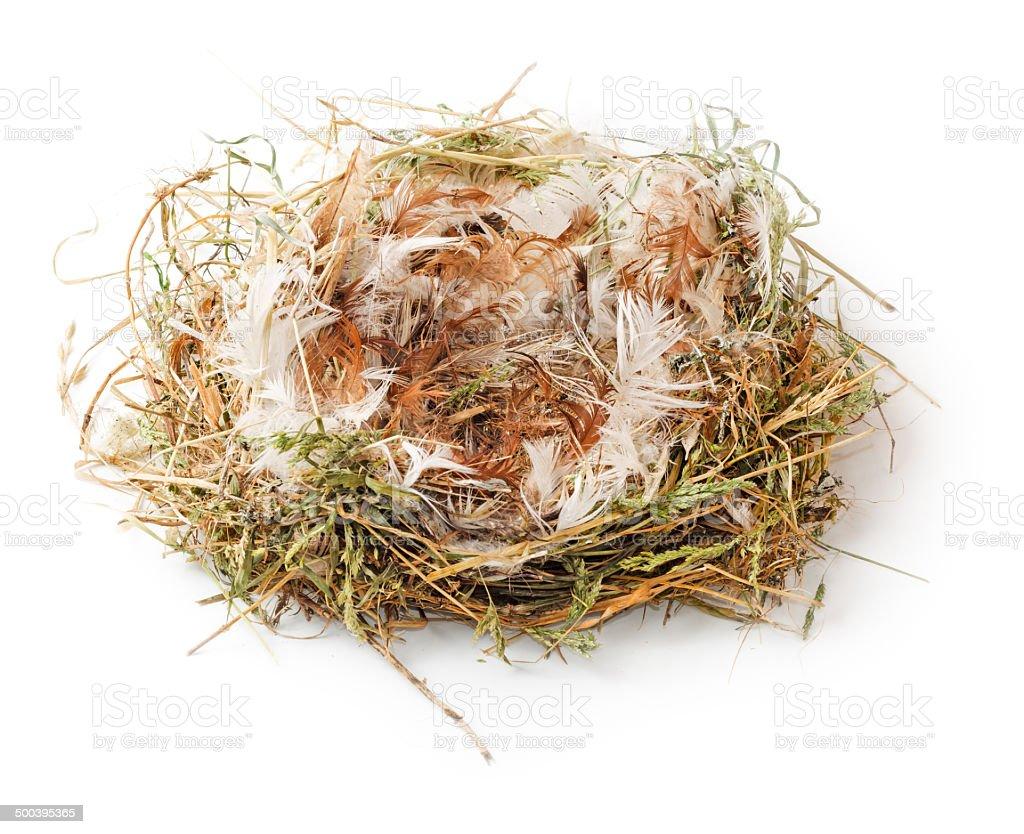 Empty nest royalty-free stock photo