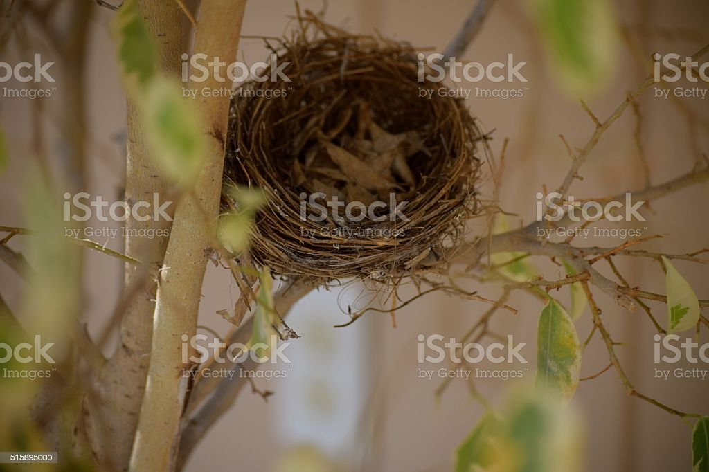 Empty Nesting stock photo