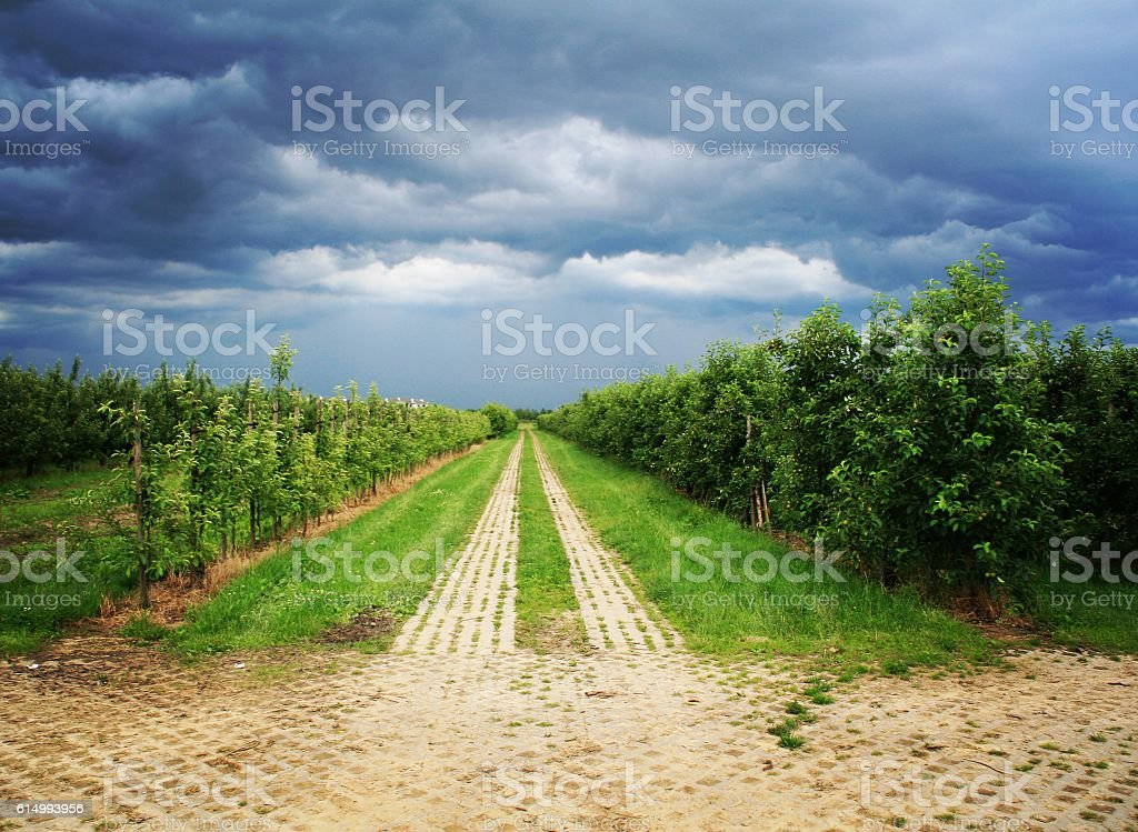 Empty, ominous field in the Polish countryside outside Warsaw, Poland stock photo