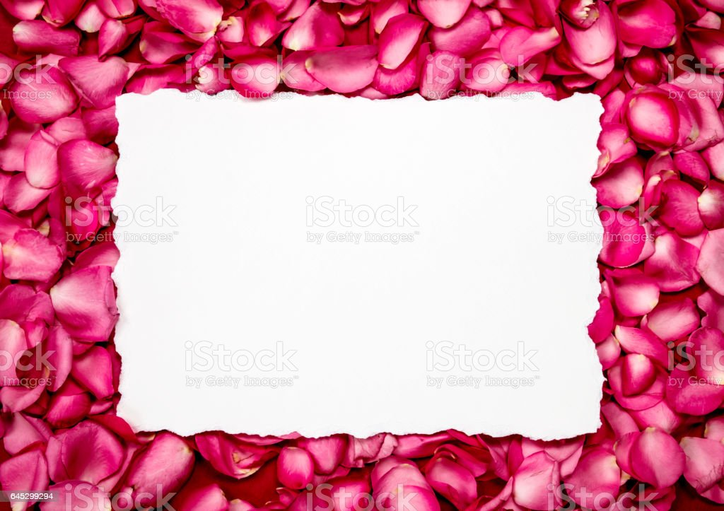 Empty paper with  sweet pink roses  petal stock photo