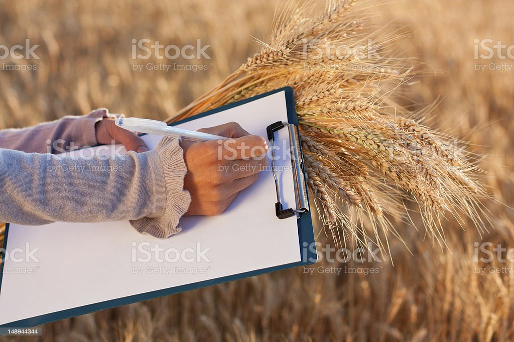 Empty paperwork, pen and ears wheat in women's hands royalty-free stock photo