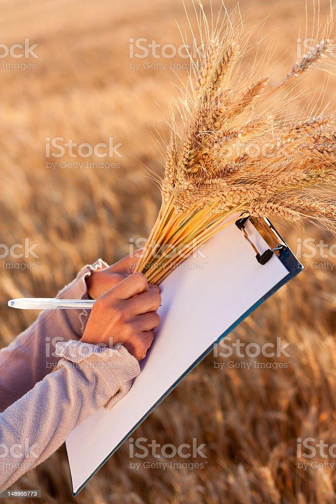 Empty paperwork, pen and golden ears wheat in women's hands royalty-free stock photo