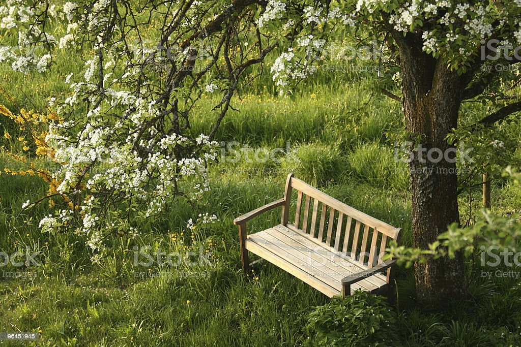 empty park bench under blossoming tree stock photo