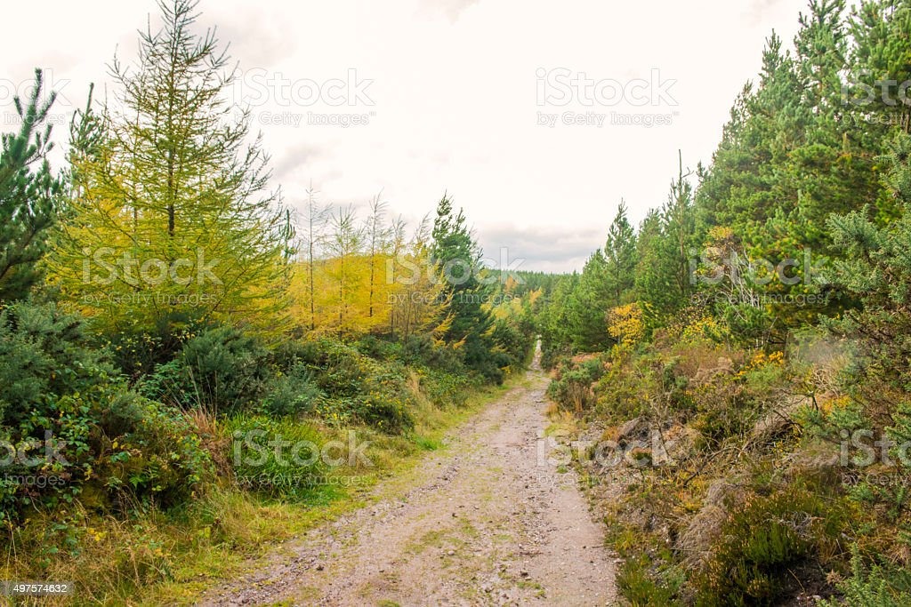Empty path deep in the forest stock photo