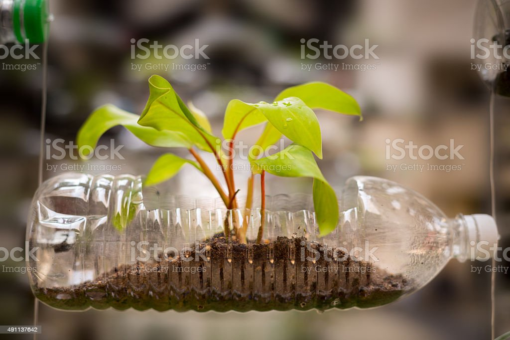Empty plastic bottle use as a container for growing plant stock photo