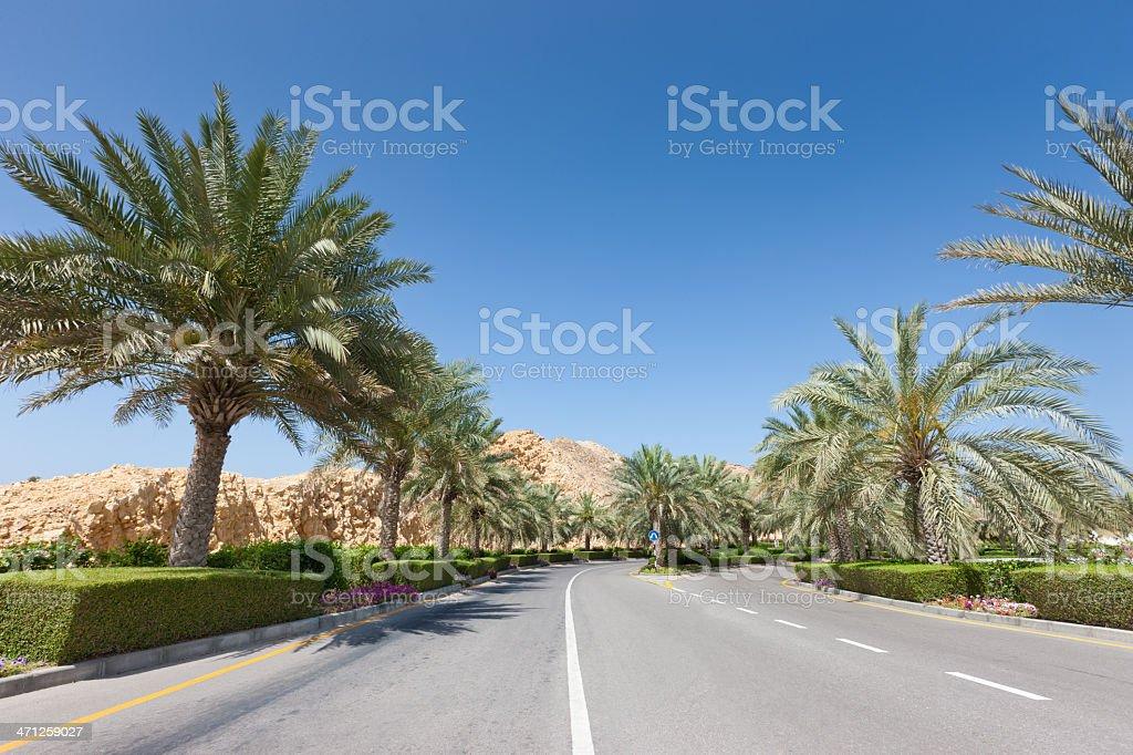 Empty Road between Palm Trees Oman Coast royalty-free stock photo