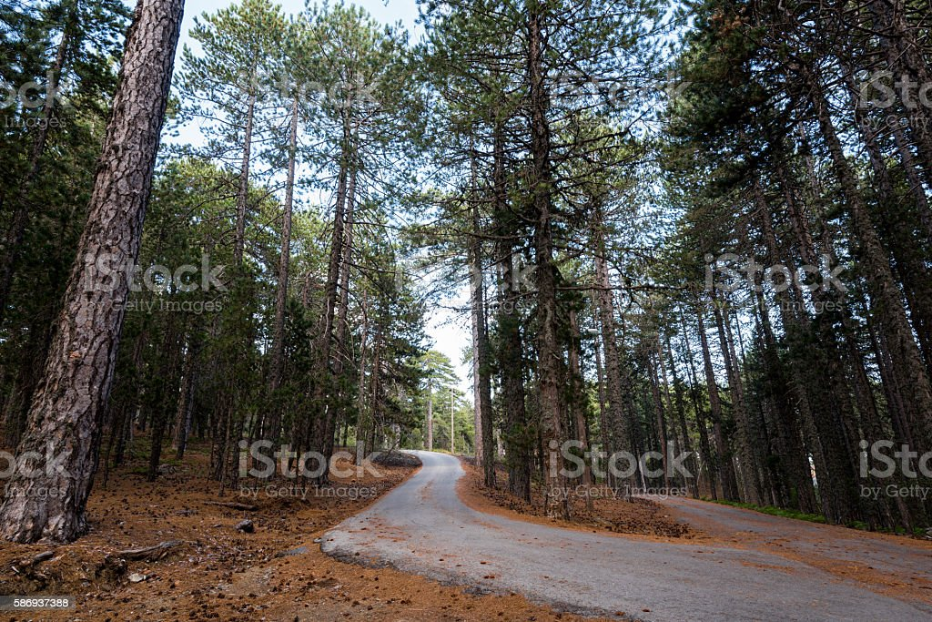Empty road passing through the forest stock photo