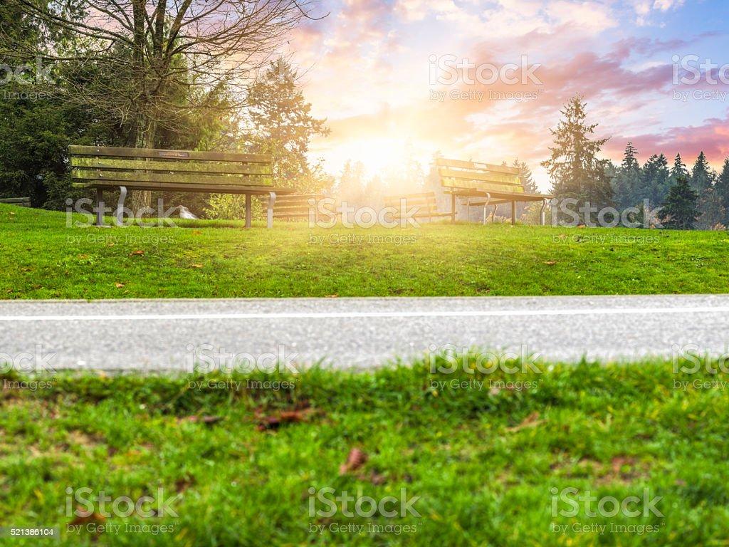 empty road through Stanley Park stock photo