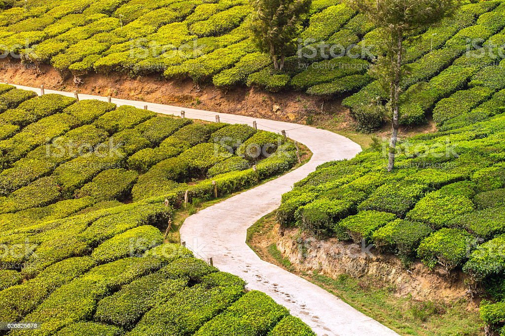 Empty road through tea plantations in Munnar, India stock photo
