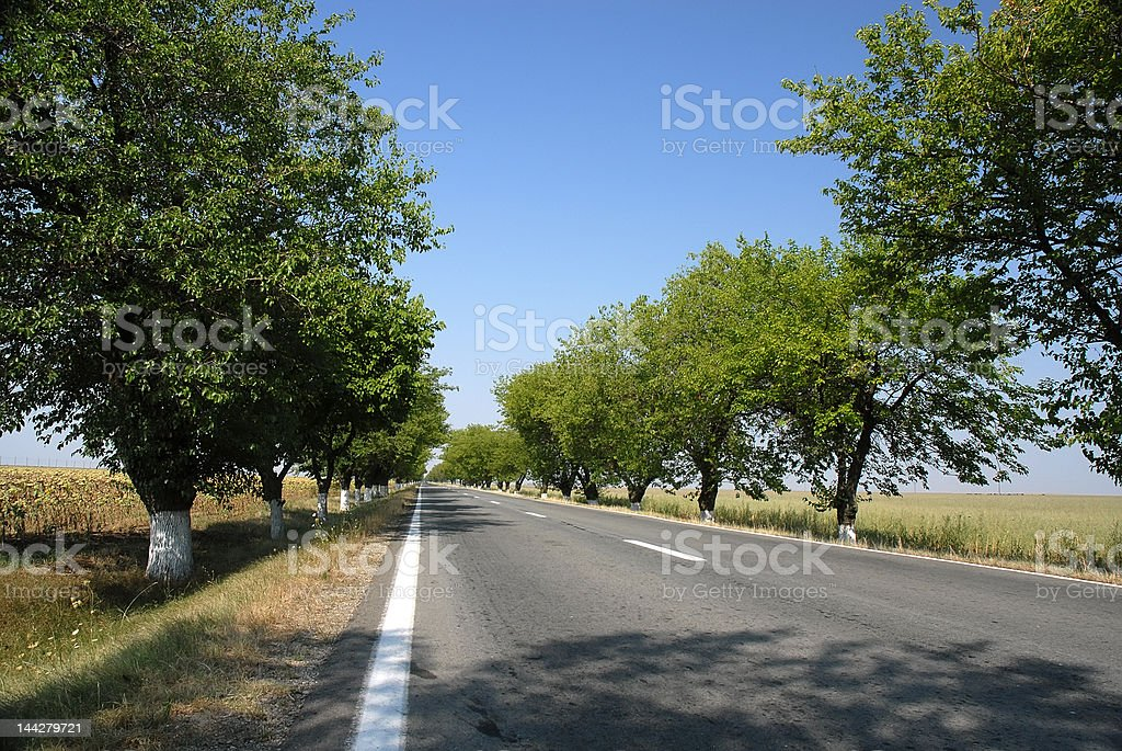 empty road with trees royalty-free stock photo