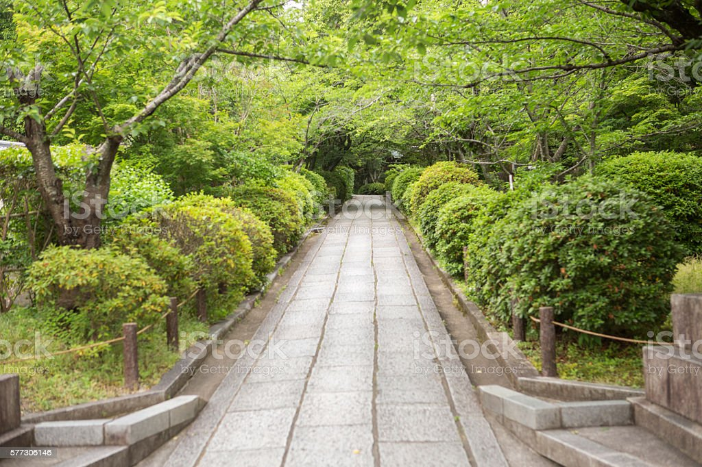 empty side street with trees in kyoto japan stock photo