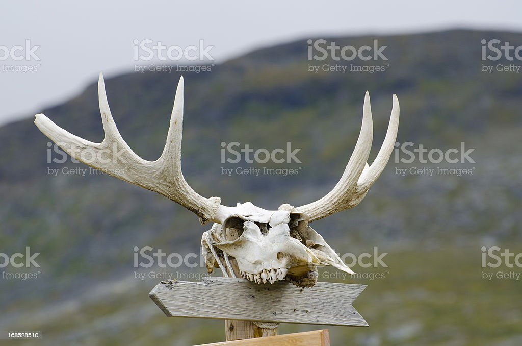 Empty sign post with moose skull and antlers royalty-free stock photo