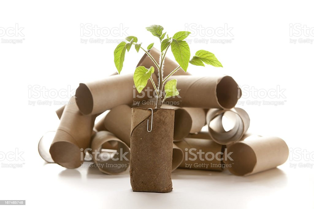 Empty toilet paper roll made into a planter stock photo