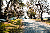 Empty, tree-lined country road in summer or autumn season.