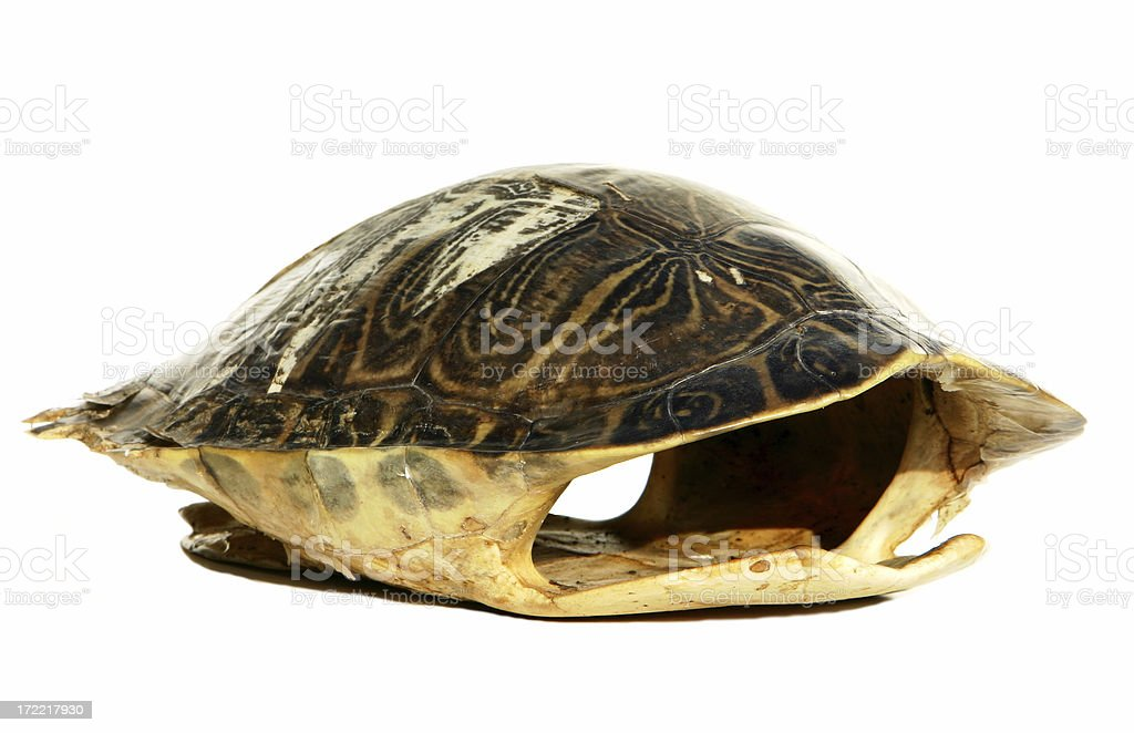 Empty Turtle Shell royalty-free stock photo