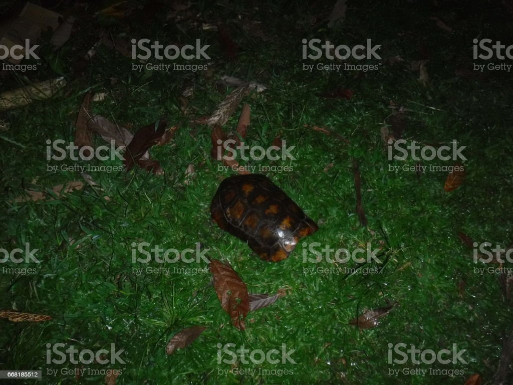 Empty Turtle Shell stock photo