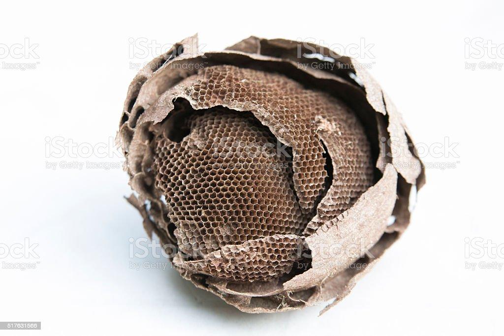 Empty wasp hive royalty-free stock photo