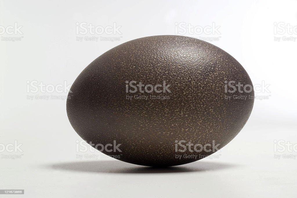Emu Egg royalty-free stock photo