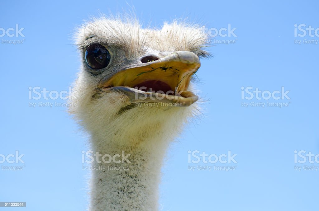 Emu on Lookout stock photo