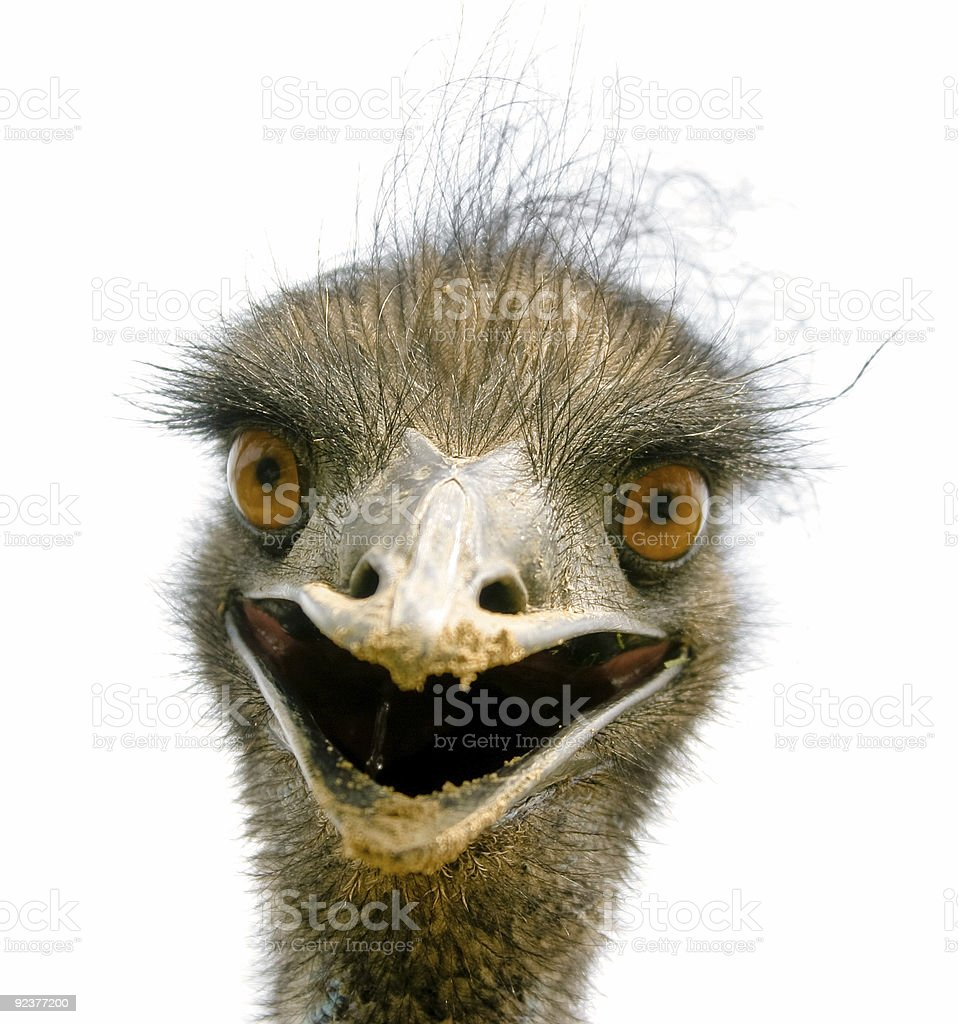 Emu to Meet You stock photo