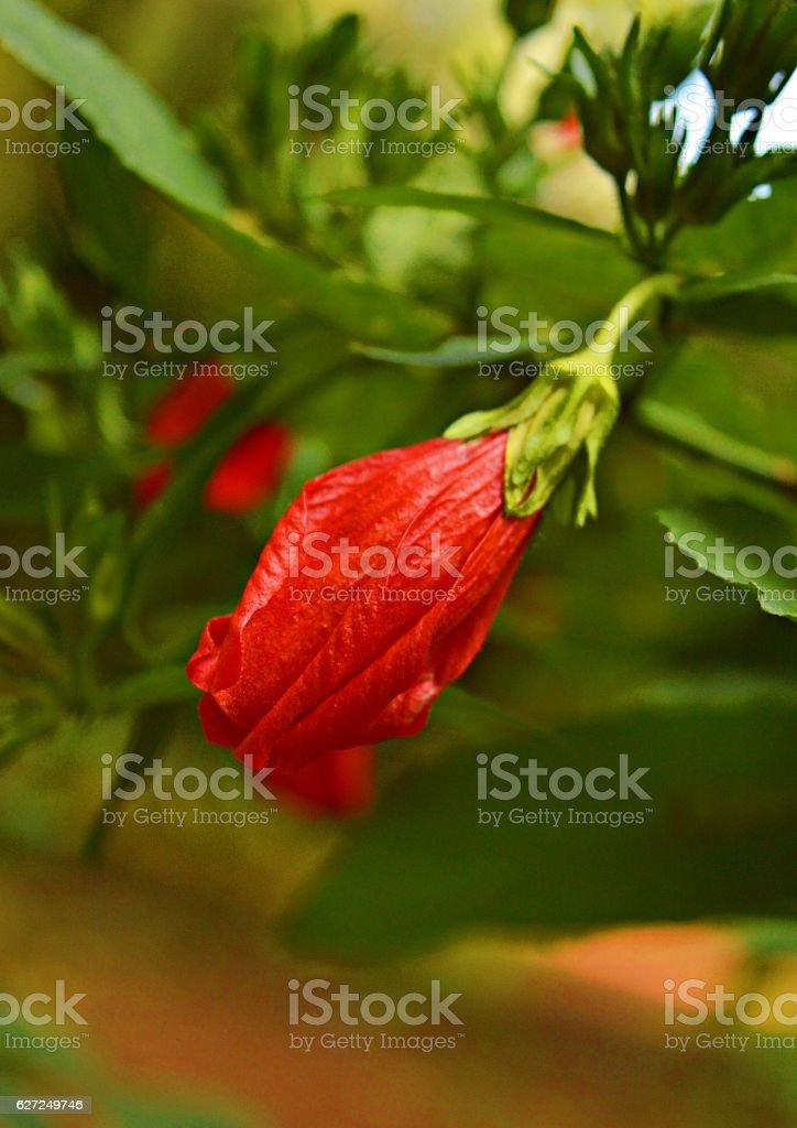 en flor stock photo
