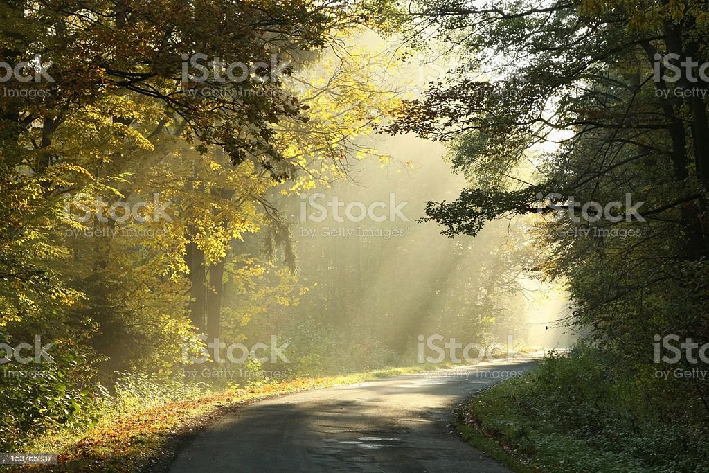 Enchanted autumn forest at dawn royalty-free stock photo