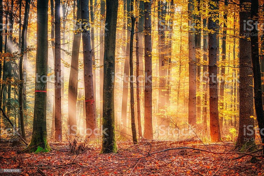 Enchanted Autumn Forrest stock photo