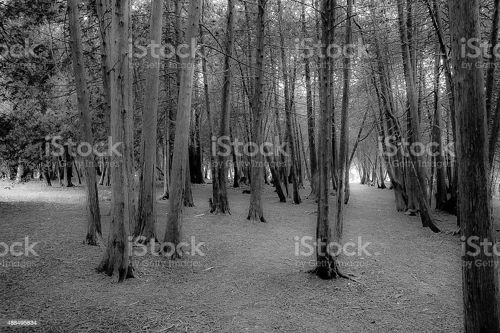 Enchanted Elora Woods stock photo