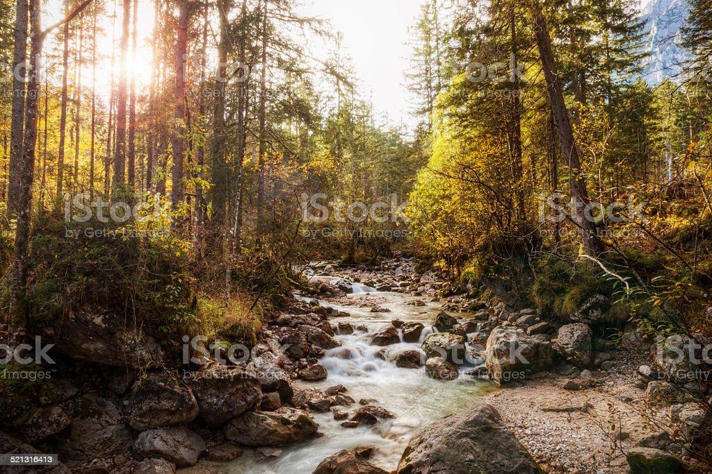Enchanted Forest (Zauberwald) in Germany stock photo