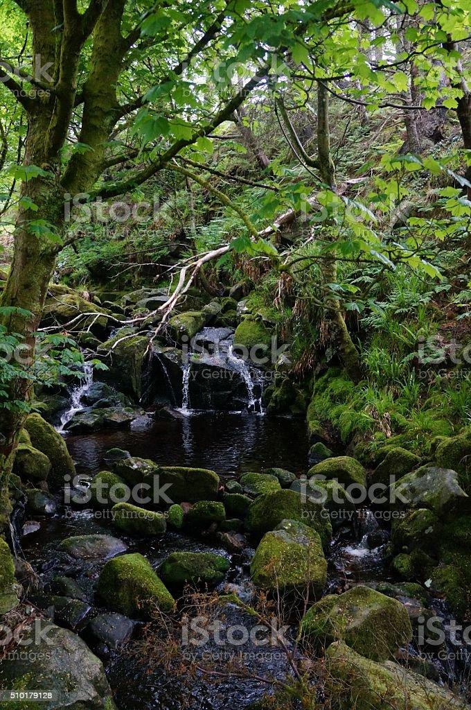 Enchanted bosque foto de stock libre de derechos