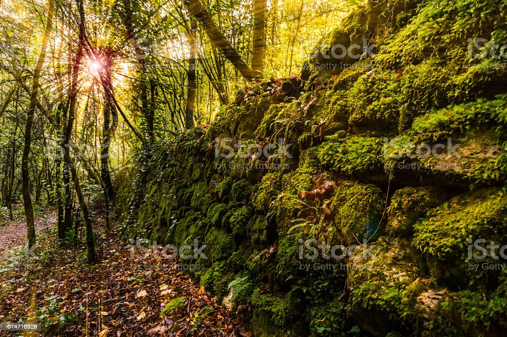Enchanted forest scene stock photo