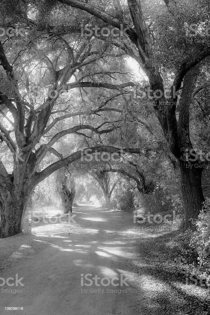 Enchanted Hollow royalty-free stock photo