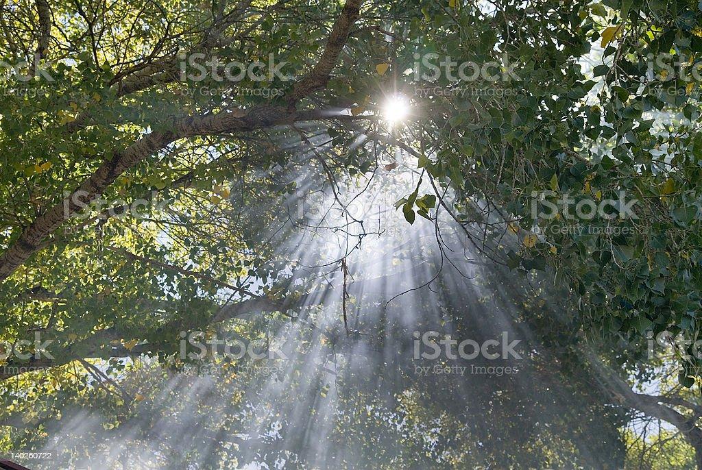 Enchanted light royalty-free stock photo